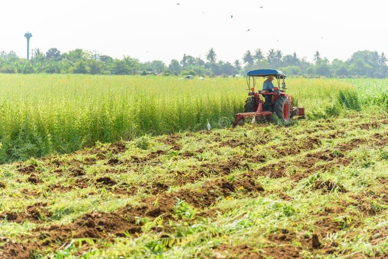 Incorporation de tracteur l'engrais vert image stock