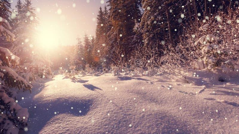Incrível Fundo da Natureza do inverno Paisagem Wintry com queda de neve imagens de stock