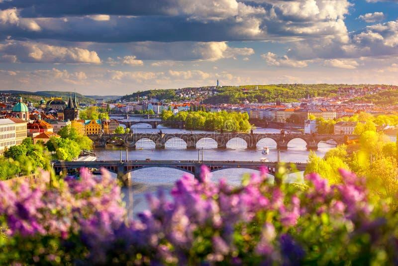 Incrível paisagem urbana de primavera, rio Vltava e antigo centro da cidade, com um florescimento lilás colorido no parque Letna, foto de stock royalty free
