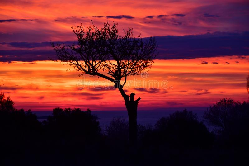 Dramatic Sky, Incredible colors , silhouette of a tree with strange shapes after the sunset. Silhouette of a tree with strange shapes after the sunset, Dramatic royalty free stock photo