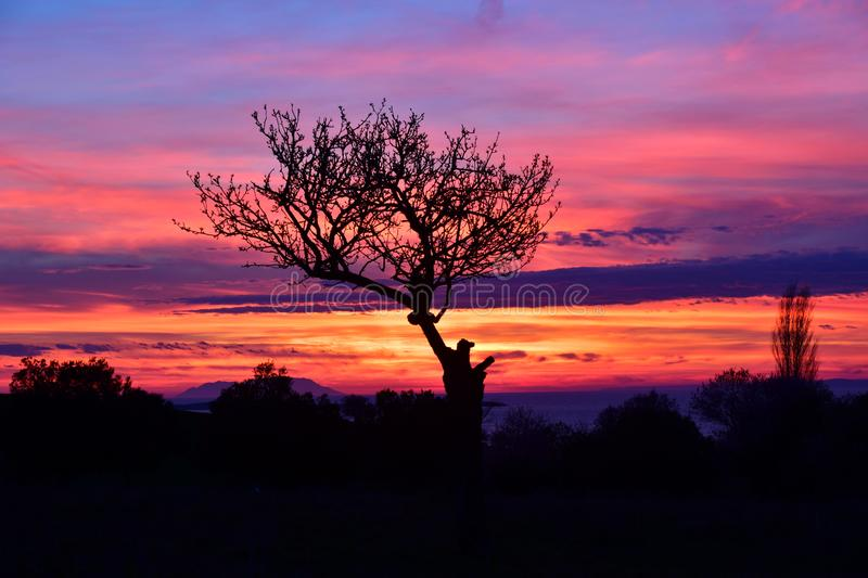Incredible colors , silhouette of a tree with strange shapes after the sunset. Silhouette of a tree with strange shapes after the sunset stock photography