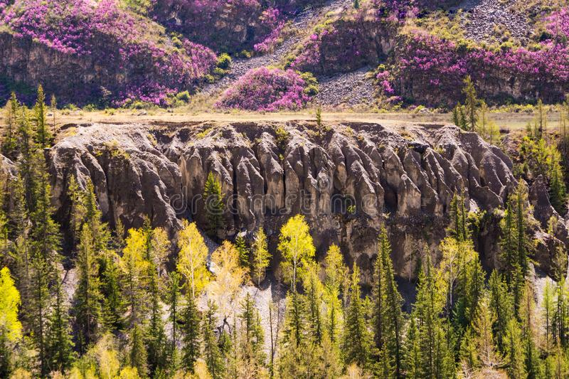 Incredible landscape of Altai mountain valley with trees and hills stock photography