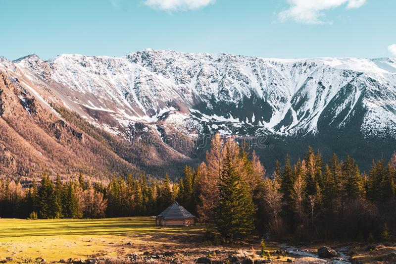 Incredible landscape with trees on the background of snow-covered peaks of the Altai mountains royalty free stock image