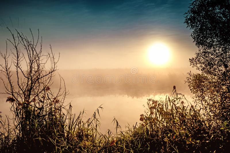 Incredible mystical morning landscape with rising sun, tree, reed and fog over the water. Incredible mystical morning landscape with rising sun, tree, reed and stock image