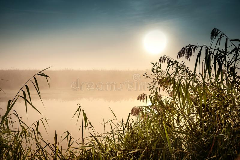 Incredible mystical morning landscape with rising sun, tree, reed and fog over the water. Incredible mystical morning landscape with rising sun, tree, reed and royalty free stock image
