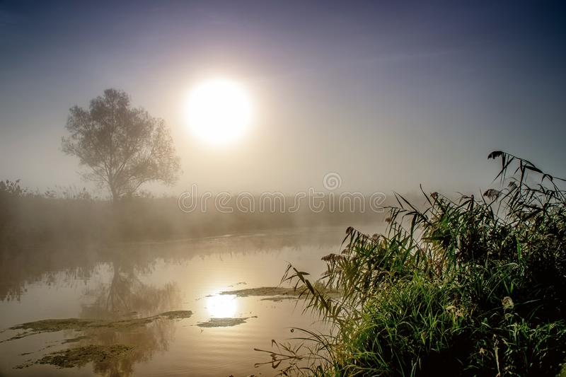 Incredible mystical morning landscape with rising sun, tree, reed and fog over the water. Incredible mystical morning landscape with rising sun, tree, reed and royalty free stock images