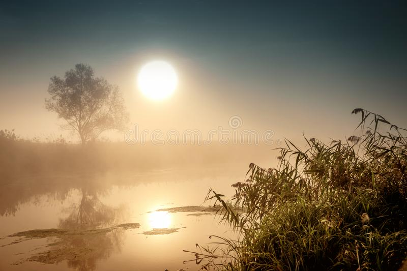 Incredible mystical morning landscape with rising sun, tree, reed and fog over the water. Incredible mystical morning landscape with rising sun, tree, reed and stock photography
