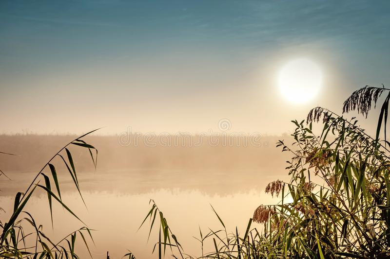 Incredible mystical morning landscape with rising sun, tree, reed and fog over the water. Incredible mystical morning landscape with rising sun, tree, reed and royalty free stock photography