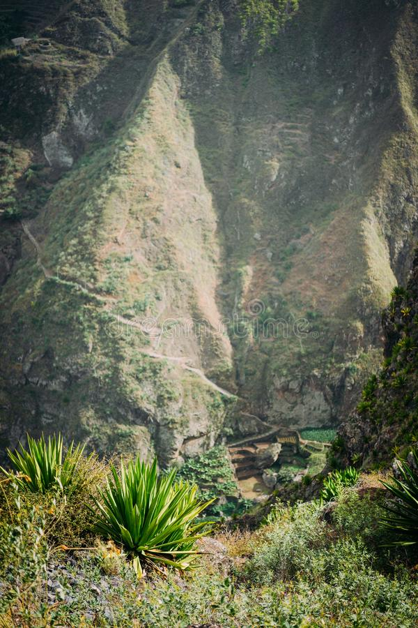 Incredible view of the steep mountain and path to green ravine. Huge agave plants in foreground in warm sunrays light. Incredible view of the lush green ravine royalty free stock photos