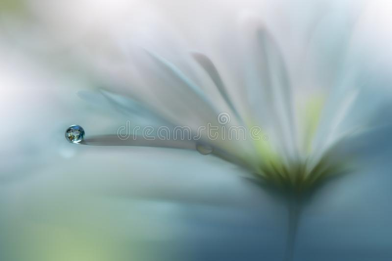Beautiful Nature Background.Abstract Artistic Wallpaper.Art Photography.Spring White Flowers.Water drop.Blue,pure,light.Card,love. Incredibly beautiful Nature stock image