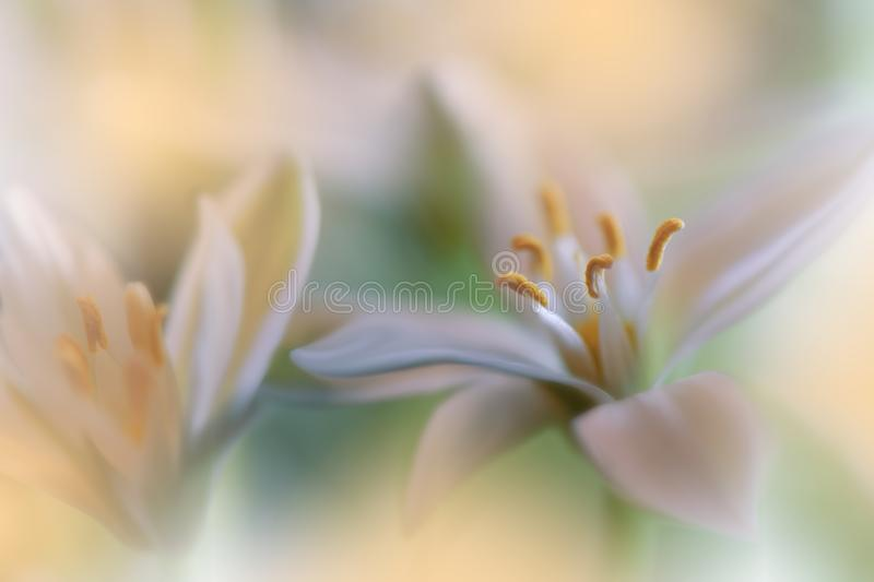 Beautiful Golden Nature Background.Abstract Artistic Wallpaper.Art Macro Photography.Wedding Invitation.Floral Design.Copy Space. royalty free stock image