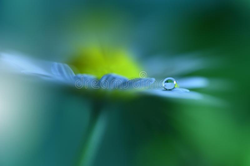 Beautiful Green Nature Background.Abstract Artistic Wallpaper.Macro Photography.Floral Art Design.Daisy Flower.Water Drop.Ecology. Incredibly beautiful Nature royalty free stock photo