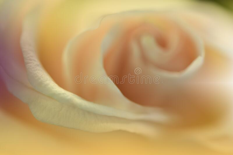Beautiful Nature Background.Abstract Wallpaper.Celebration,love.Holidays.Summer Flowers.Art Design.Rose Flower.Yellow Colors. stock photo
