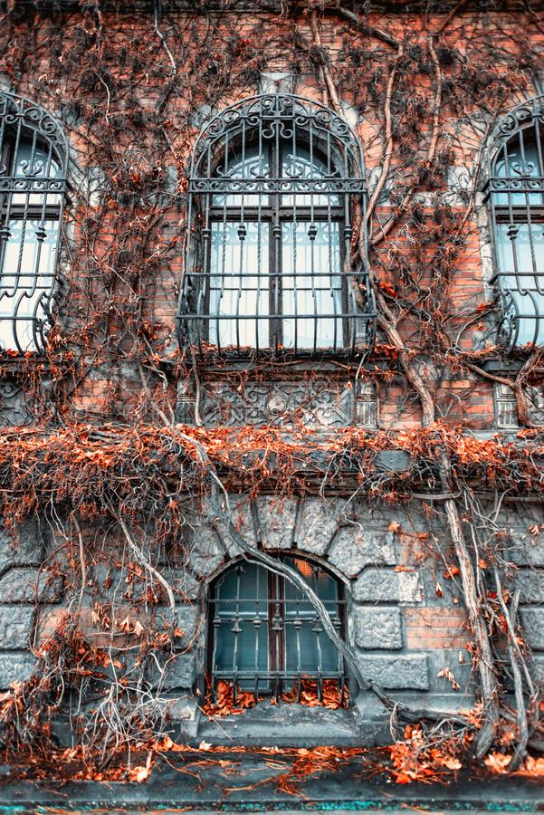 Incredibly fabulous walls of the Wroclaw National Museum are covered with wicker bushes, mystical windows royalty free stock photo