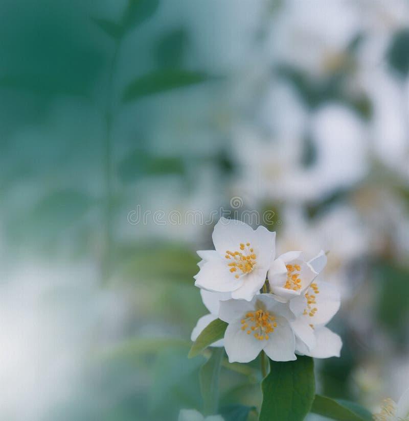 Incredibly härlig natur Konstfotografi Blom- fantasidesign Abstrakt makro, closeup Grön bakgrund Fantastisk färgrik blomma fotografering för bildbyråer