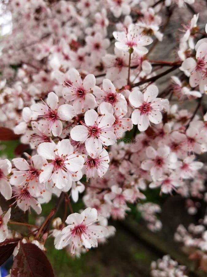 Incredibly härliga blommor som jag fångade precis på huset fotografering för bildbyråer