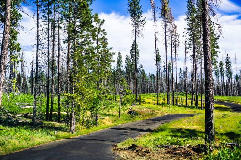 Incrocio di strada pavimentato stretto un prato fertile, parco nazionale di Yosemite, montagne di Sierra Nevada, California; gior immagini stock