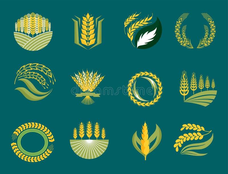 Indústria da agricultura das orelhas e das grões do cereal ou símbolo natural orgânico da ilustração do alimento do vetor do proj ilustração royalty free