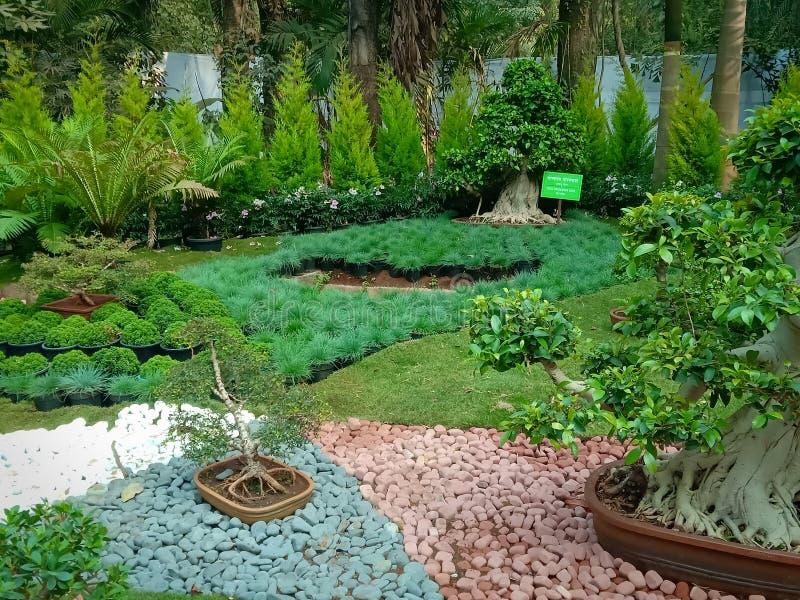 Indain家庭装饰的盆景树 库存照片