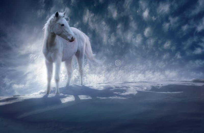 Indecisos da neve imagens de stock royalty free