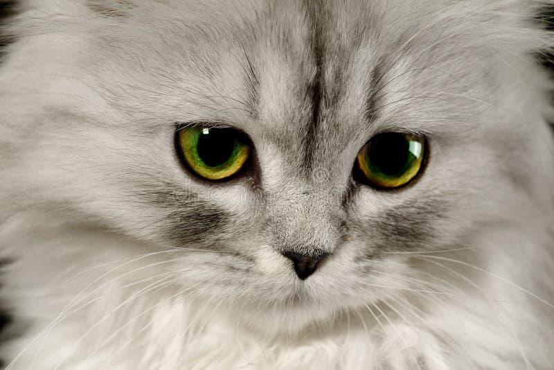 Indennità del gatto per nome fotografia stock libera da diritti
