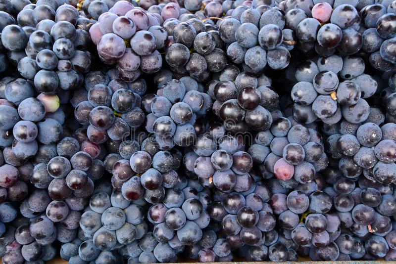 Indiańscy czarni winogrona obrazy stock
