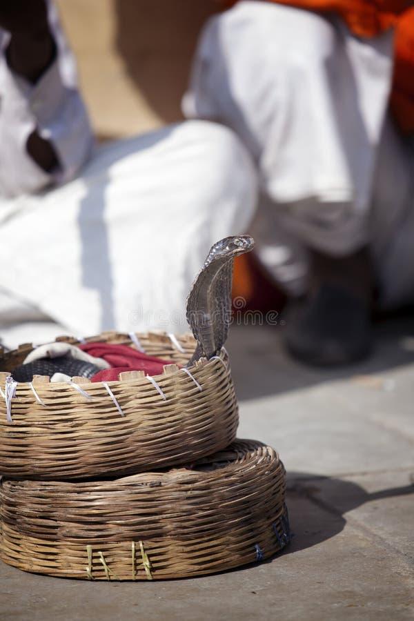 Indiańska kobra patrzeje z koszykowego fakir fotografia stock