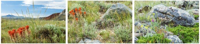 Indiański farby muśnięcia pustyni pogórzy kolaż zdjęcie royalty free