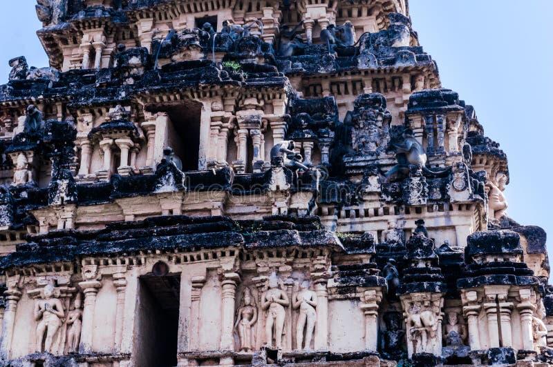 Indiański langurs sittng na świątyni w Hampi, Karnataka, India fotografia stock