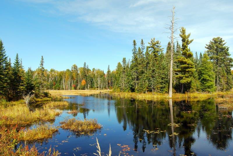 Indiański lato przy jeziorem w Algonquin prowincjonału parku blisko Toronto w jesieni, Kanada obrazy royalty free