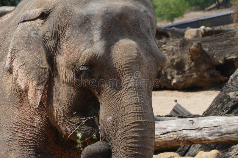 Indiański słoń zdjęcia royalty free