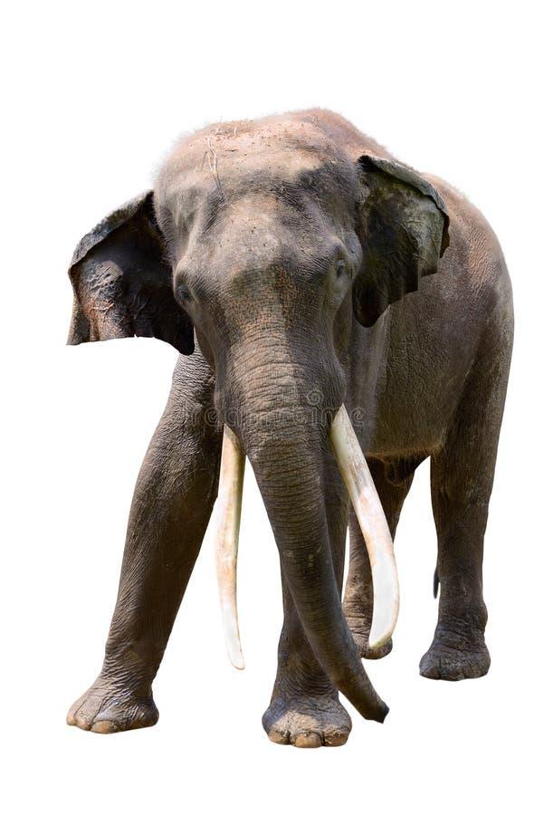 Indiański słoń fotografia royalty free