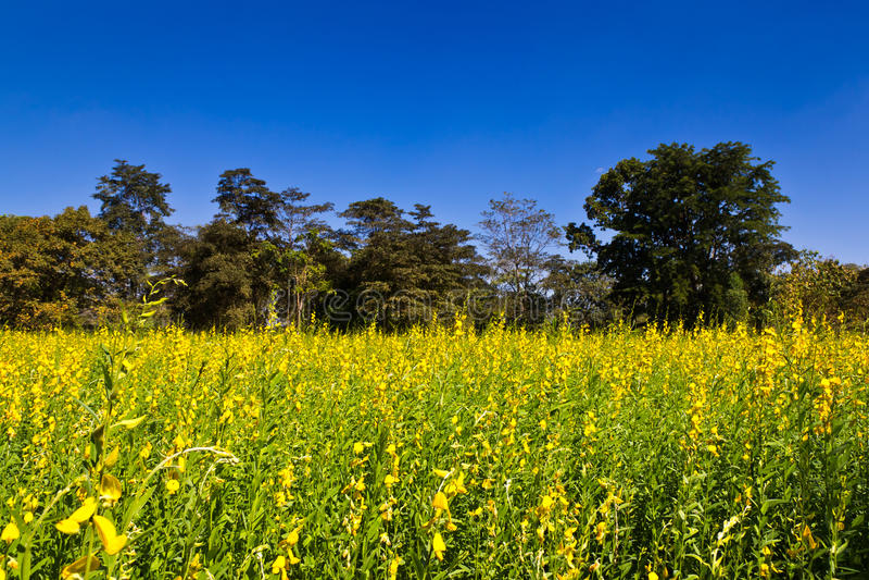Indiańskiego konopie łąka zdjęcie stock