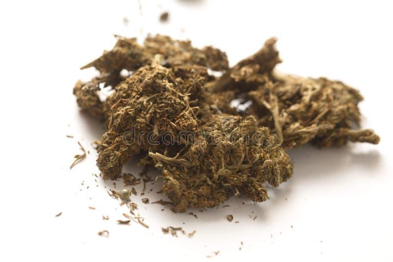 Indiańskiego konopie i haszyszy marihuana obrazy stock