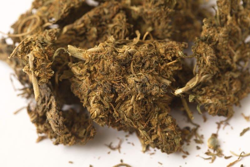 Indiańskiego konopie i haszyszy marihuana fotografia royalty free