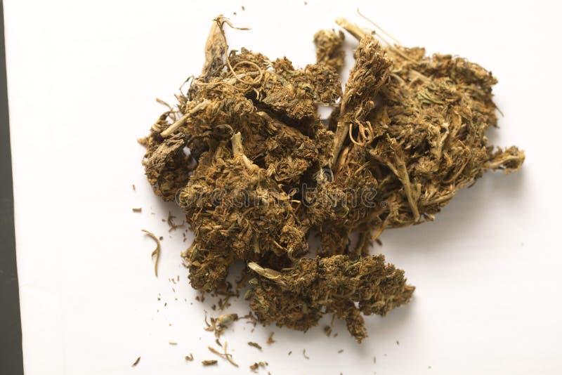 Indiańskiego konopie i haszyszy marihuana zdjęcie stock