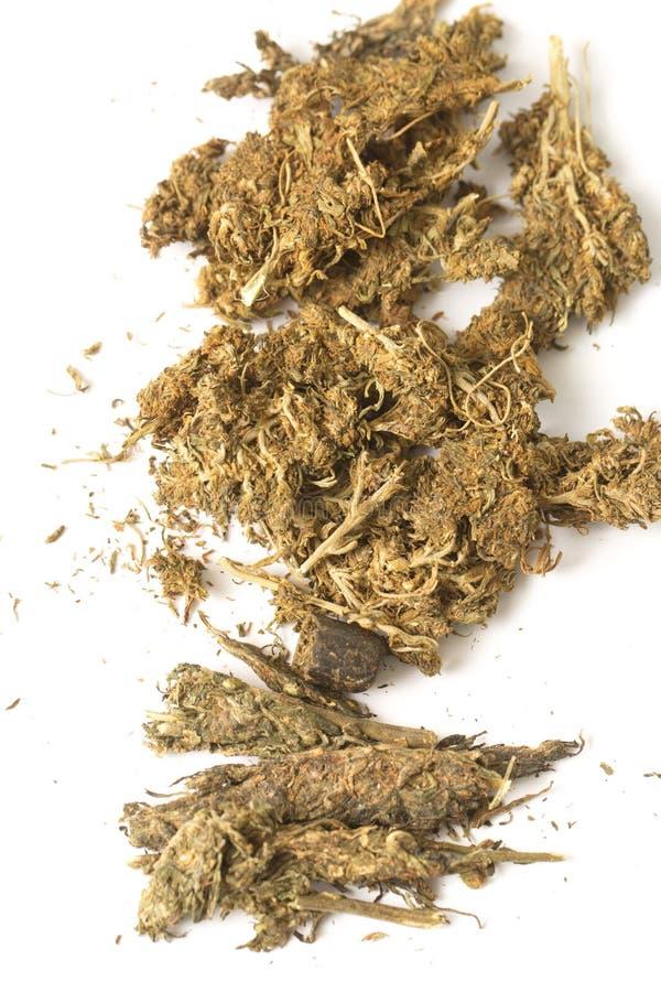 Indiańskiego konopie i haszyszy marihuana obraz royalty free