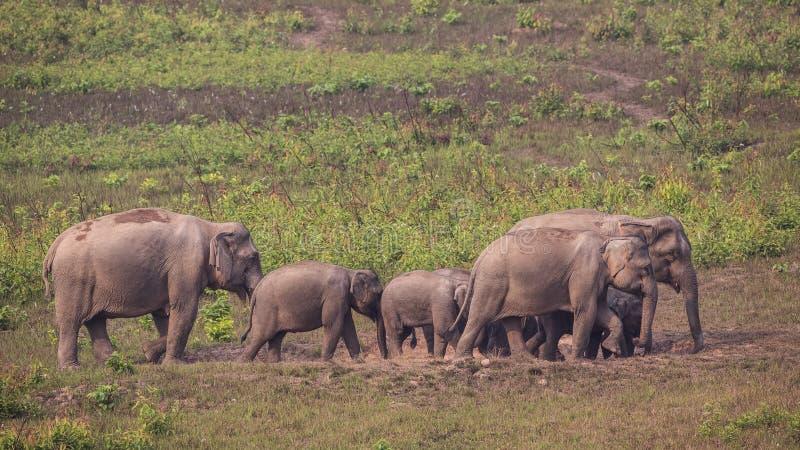 Indiańskiego słonia rodzina zdjęcie stock