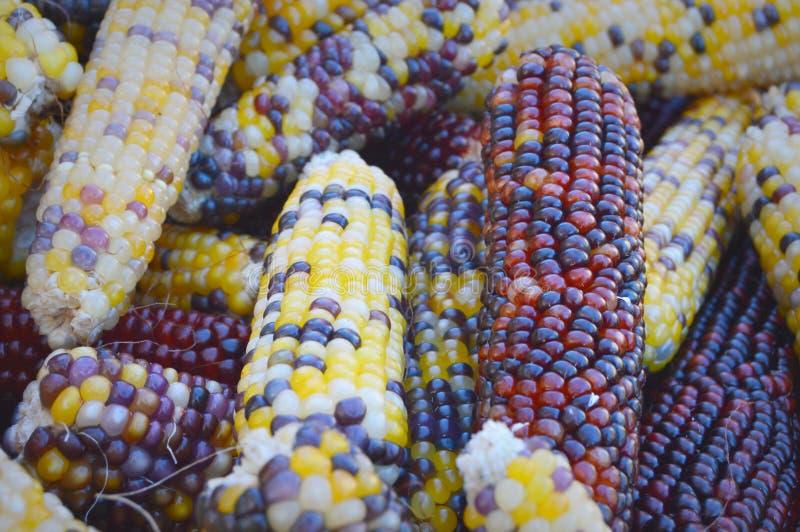 Indiańskiej kukurudzy tło obrazy stock