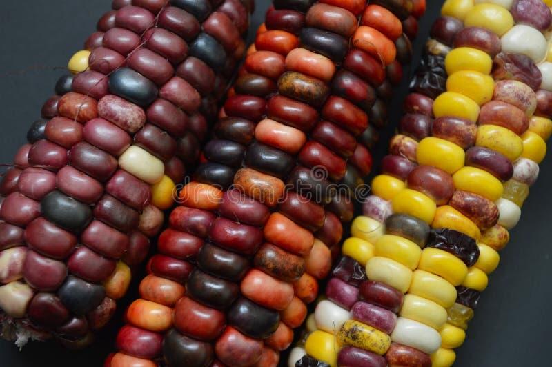 Indiańskiej kukurudzy zbliżenie zdjęcia stock