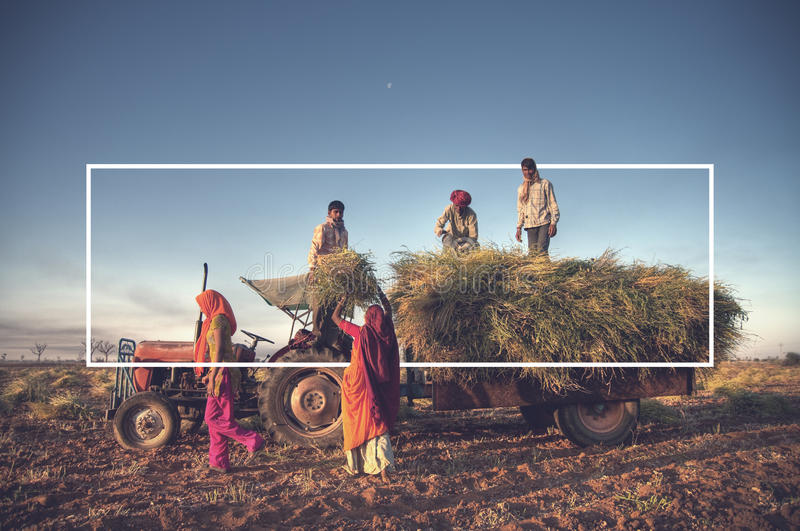 India Family Farming Harvesting Crops Concept stock image