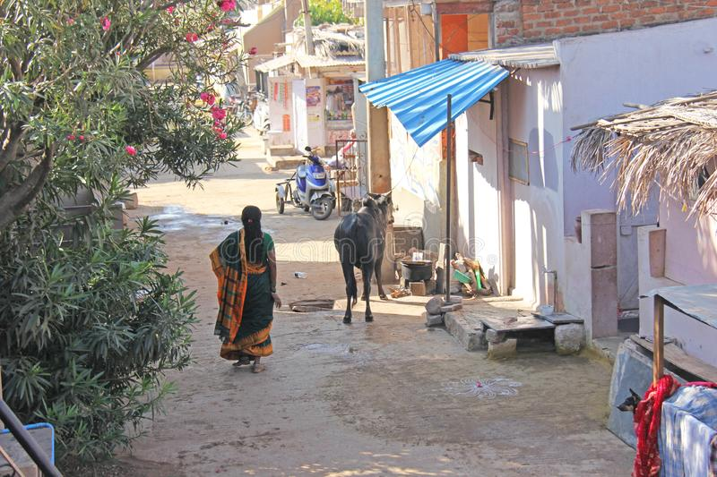 India, Hampi, 02 February 2018. The Indian Woman in the sari is walking down the street in the village of Hampi. A cow in the. Village street. Hampi stock image