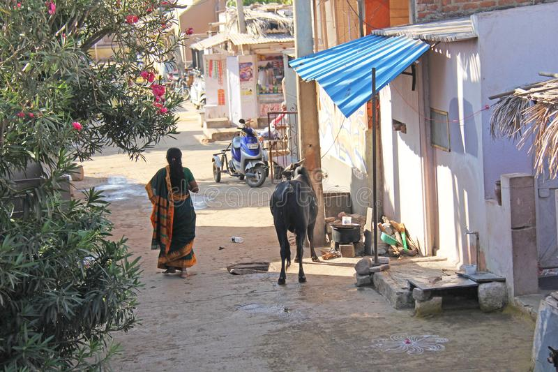 India, Hampi, 02 February 2018. The Indian Woman in the sari is walking down the street in the village of Hampi. A cow in the. Village street. Hampi stock photos
