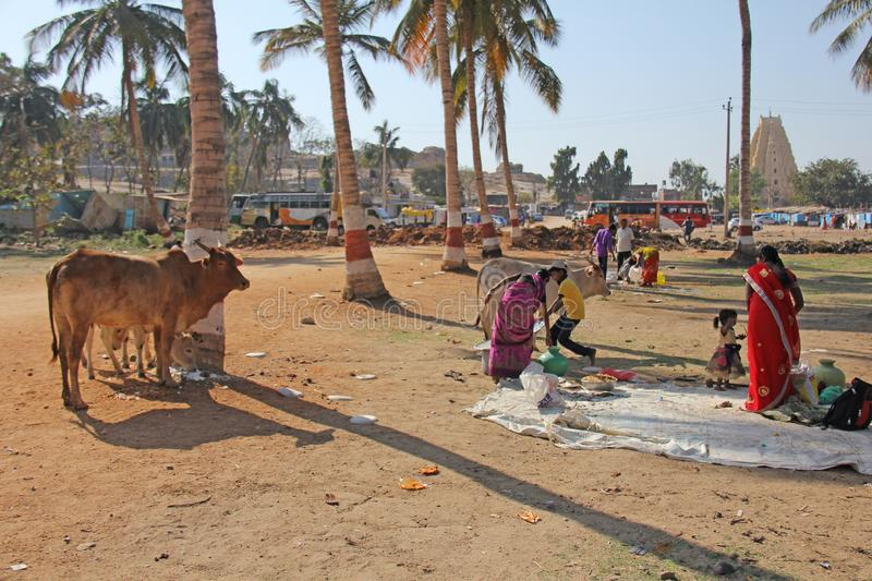 India, Hampi, 02 February 2018. Life in the village of Hampi - lunch, children, cows, palms, girls in a sari. The life of Indian. Residents or people stock photography