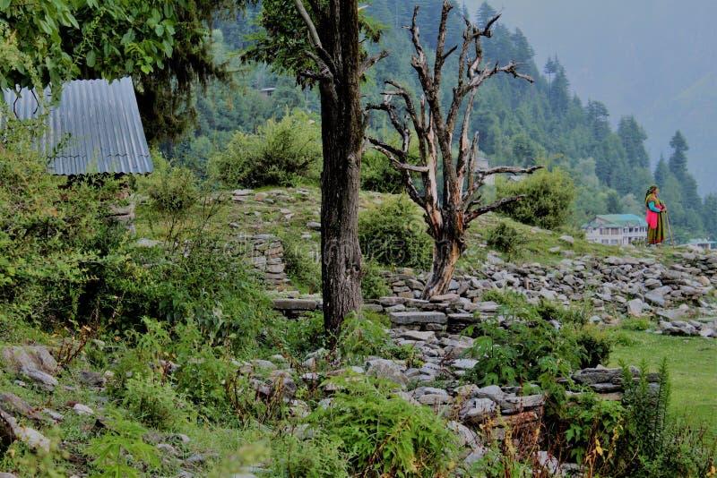 INDIA, Himachal Pradesh, Manali, HERDERIN, BERG, HIMALAYAGEBERGTE stock foto