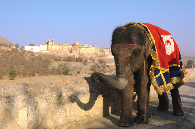 India, Jaipur: an elephant. In front of the Jaigarh Fort stock photos