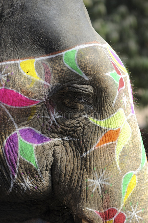 India Jaipur painted elephant. With colorful geometrical and flowers design stock photography