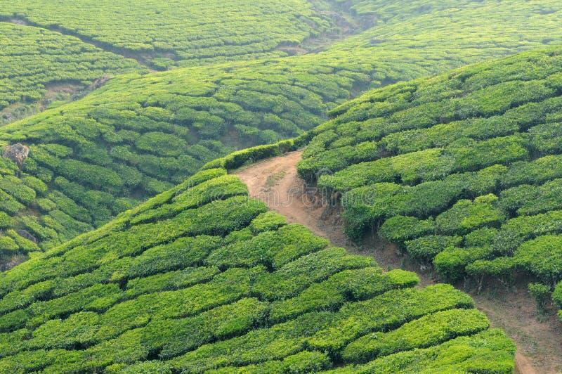 India, Kerala zdjęcia royalty free