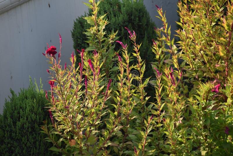India, Pinjore, Plants snapshot at Yadvindra Pinjore Garden stock images