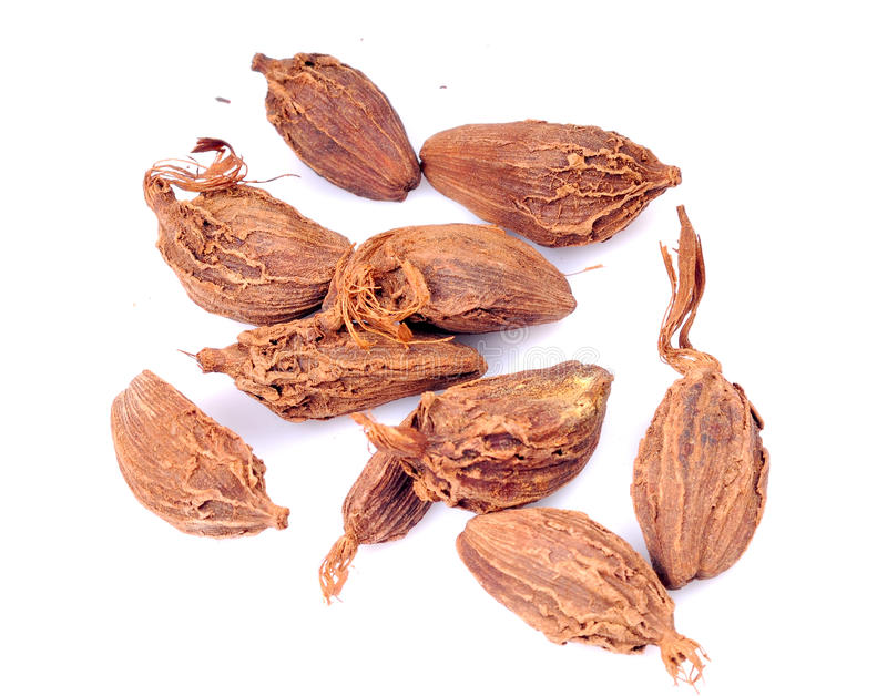 India spice cardamom stock photography